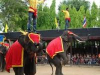 Тайланд - Шоу слонов, Паттайя