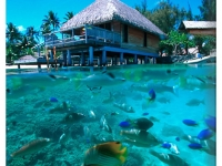 Французская Полинезия - Французская Полинезия