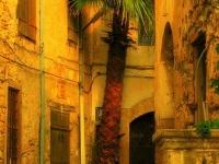 Кипр - Пальма