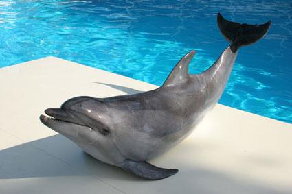 Строительство новосибирского дельфинария началось